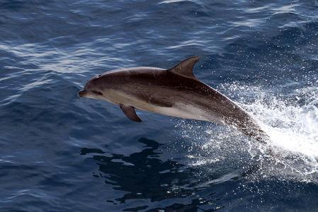 Фотообои Дельфин в море (animals-519)