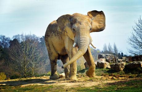 Фотообои Активный слон (animals-540)