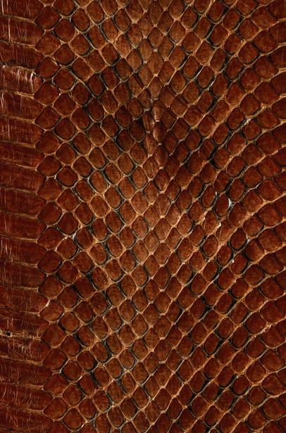 Фотообои текстура змеи (background-0000298)