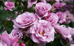flowers-0000169