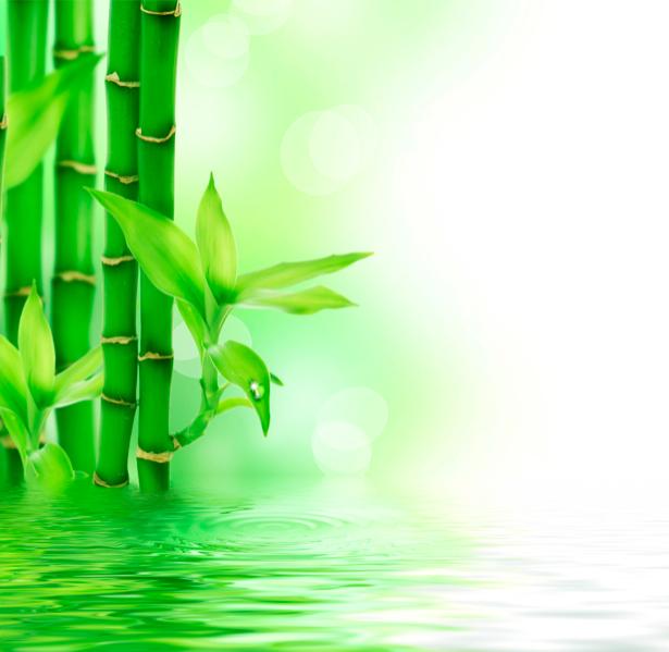 Фотообои в зал Бамбук на стену (flowers-0000251)