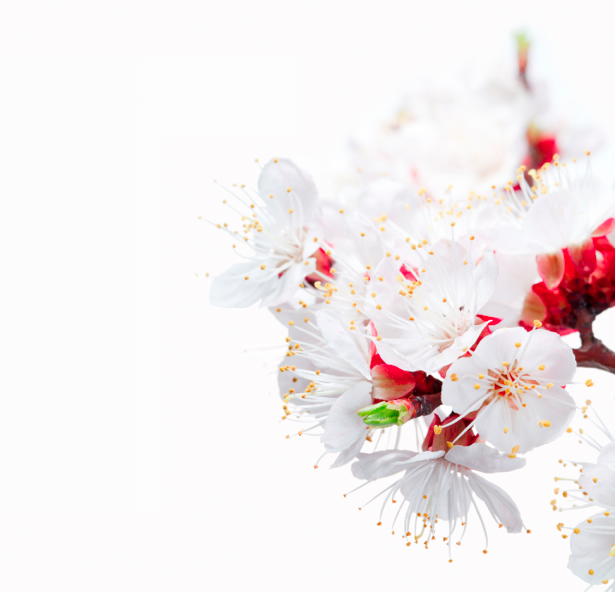 Обои фото Цветущая ветка (flowers-0000322)