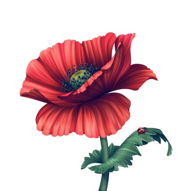 Фотообои Цветок мака (flowers-750)