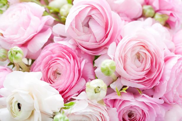 Фотообои белые и розовые розы (flowers-785)