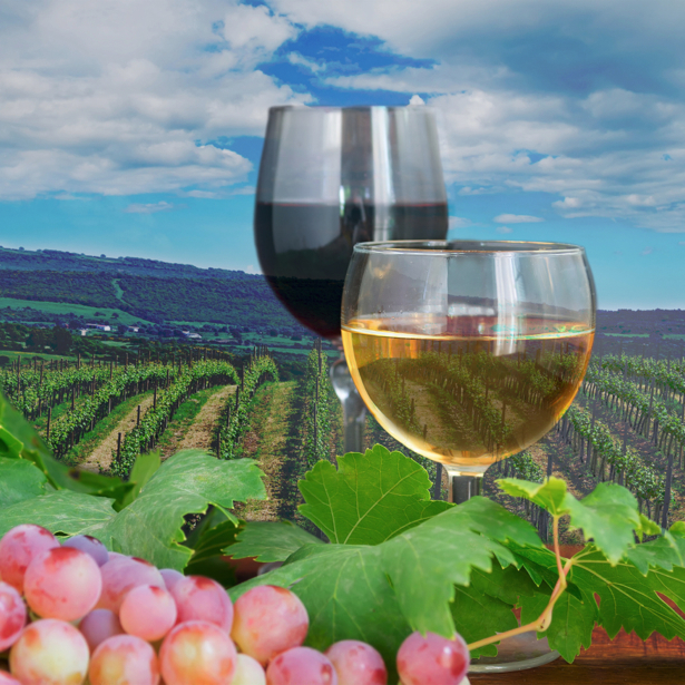 Фотообои кухня бокал вина виноградное (food-0000223)
