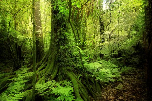 Фотообои старый лес (nature-0000695)