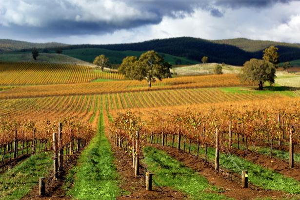 Фотообои виды природы виноградное поле (nature-00078)