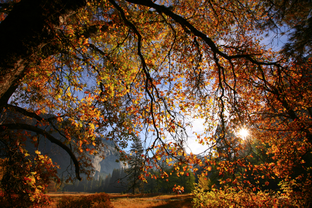 Фотообои лес осенний на закате (nature-00252)
