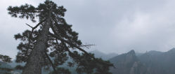 nature-00486