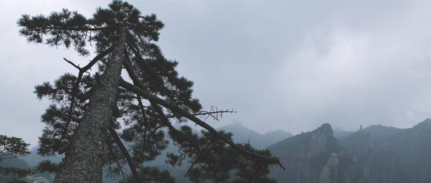 Фотообои горы сосна фото (nature-00486)