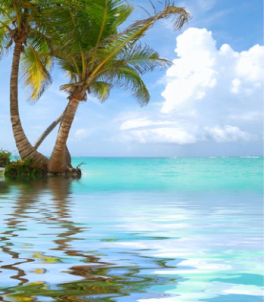 Фотообои море пальмы отражение (sea-0000040)