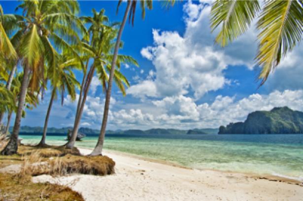 Фотообои океан берег пальмы (sea-0000132)