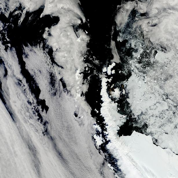 Фотообои на стену зимние офорты (terra-00227)
