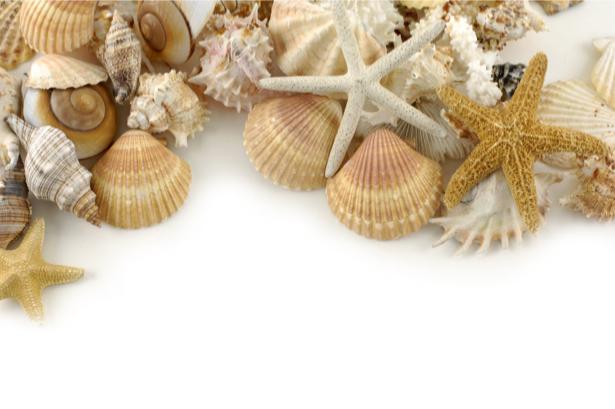 Фотообои - Морские ракушки на белом (underwater-world-00075)