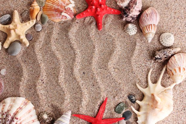 Морские ракушки на песке - фотообои (underwater-world-00095)