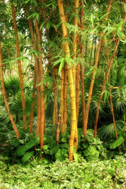 Фотообои в зал Бамбуковый лес (flowers-0000205)