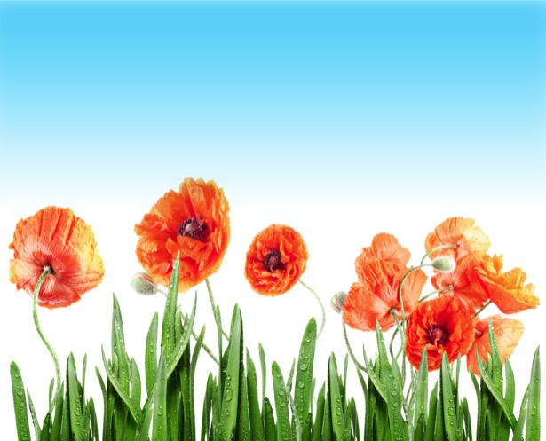 Фото обои цветы маки (flowers-0000505)