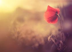 flowers-0000720