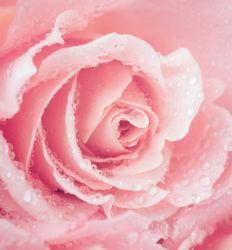 flowers-759