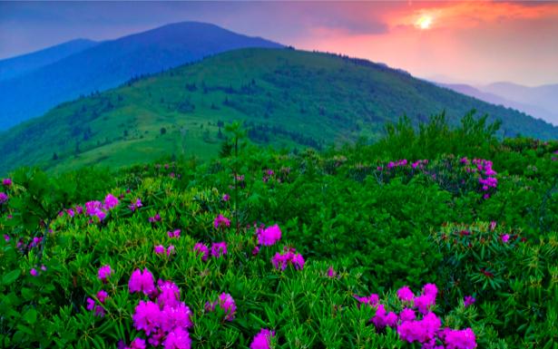 Фотообои с природой горный пейзаж цветы (nature-00051)