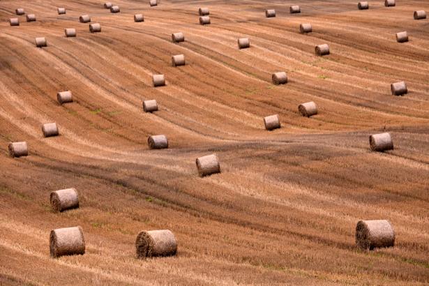 Фотообои поле сенокос (nature-00192)