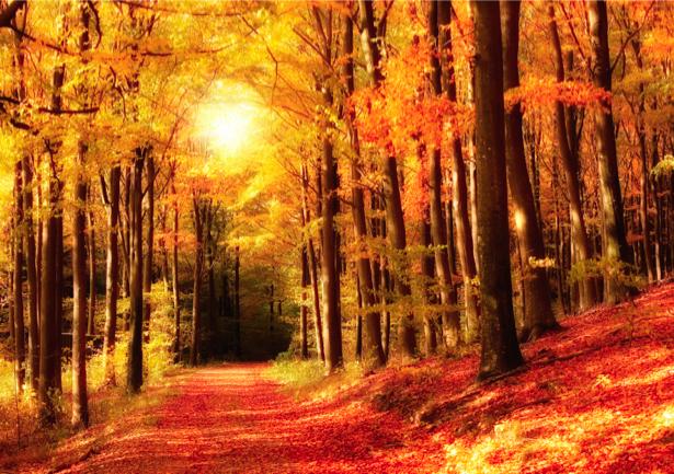 Фотообои пейзаж осени дорога лес (nature-00198)
