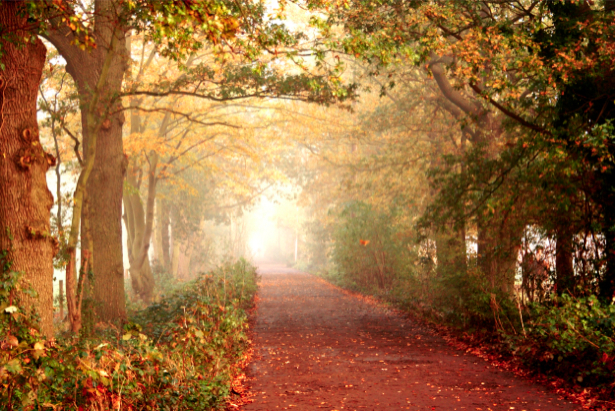 Фотообои осенняя красивая дорога (nature-00200)