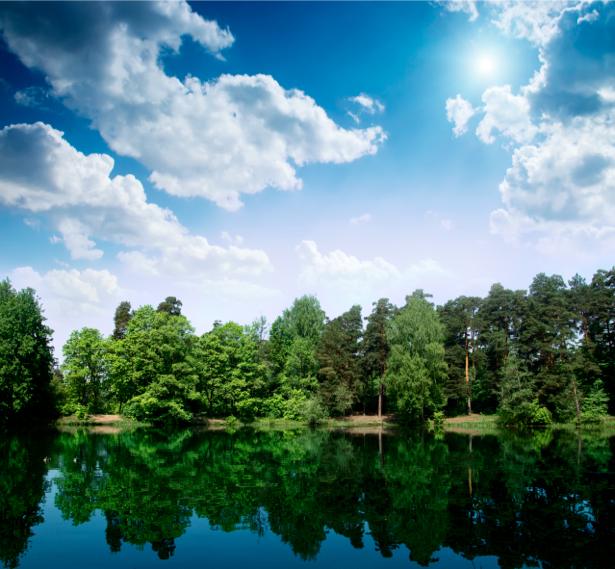 Фотообои пейзаж фото река лес (nature-00209)