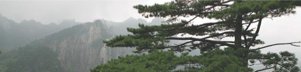 Фотообои китай горы сосна (nature-00489)