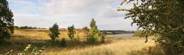 Фотообои лесной пейзаж поле и деревья (panorama_0000030)