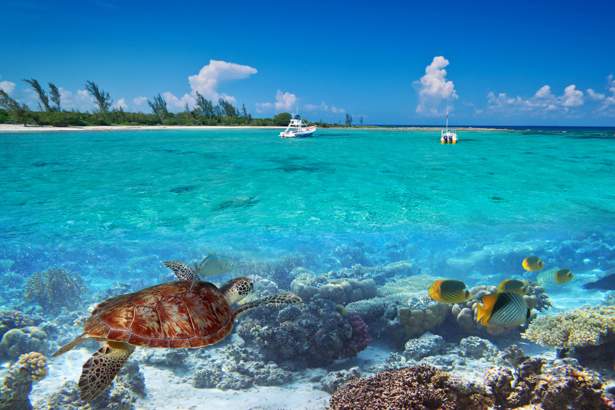 Фотообои море коралловый риф (sea-0000294)