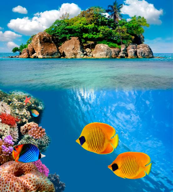 Фотообои - Подводный мир остров (underwater-world-00005)