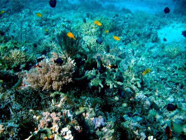 Фотообои кораллы рыбки риф (underwater-world-00040)