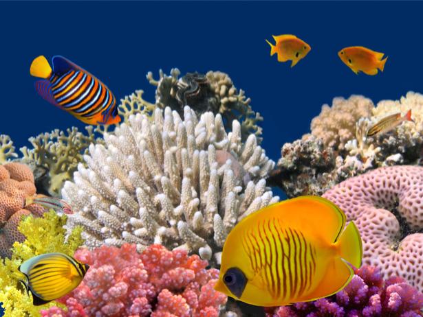 Фотообои в ванную подводный мир моря (underwater-world-00138)