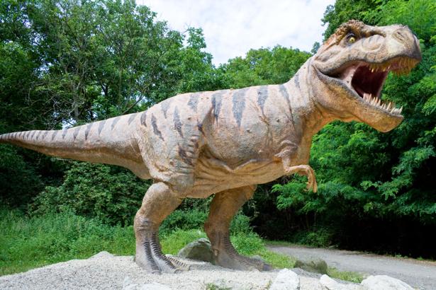 Фотообои тираннозавр голодный (animals-0000148)