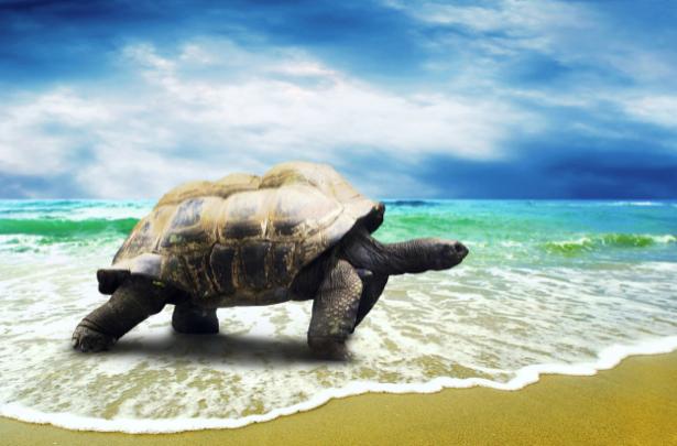 Фотообои морская черепаха (animals-0000302)