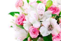 flowers-0000265