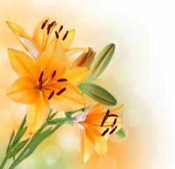 flowers-0000408