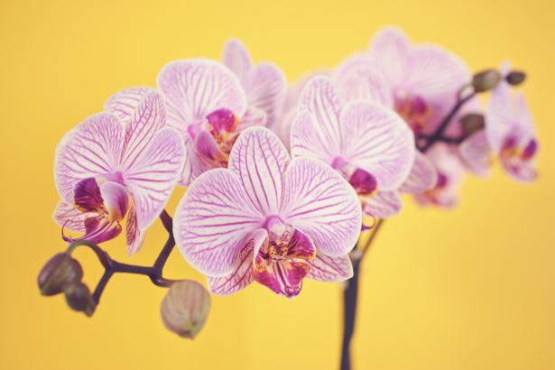 Фото обои цветок Ветка орхидеи (flowers-0000523)