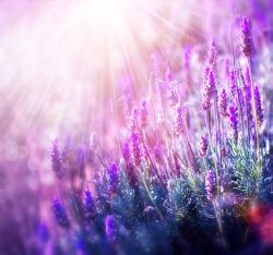 flowers-0000662