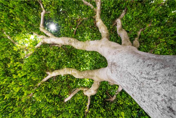 Фотообои бонсай с низу (nature-0000736)