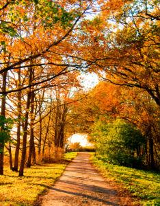 Фотообои осенний лес дорожка (nature-0000817)