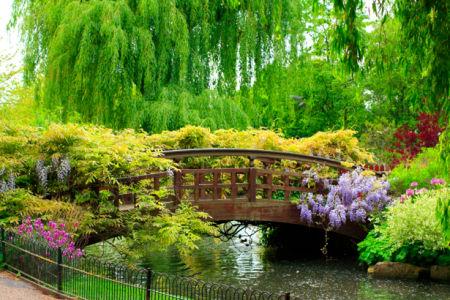 Фотообои с природой японский сад цветение (nature-00045)