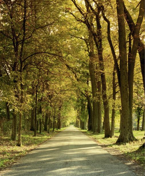 Фотообои с природой парк дорожка (nature-00055)