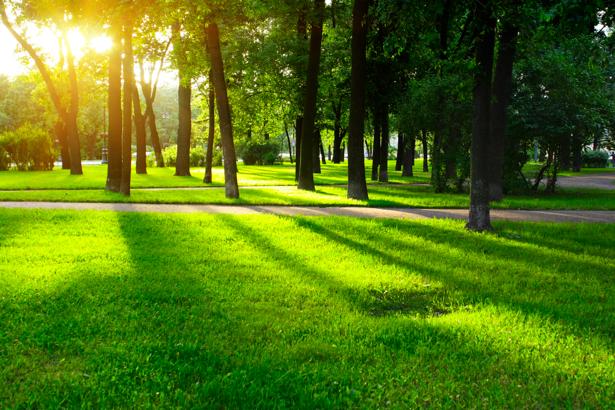 Фотообои лес поляна с травой (nature-00246)