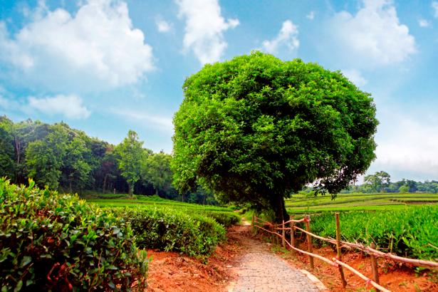 Фотообои дорога возле дерева лес (nature-00440)