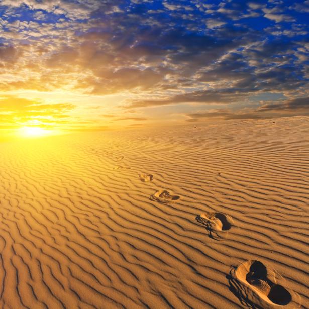 Фотообои пустыня следы закат (nature-00596)