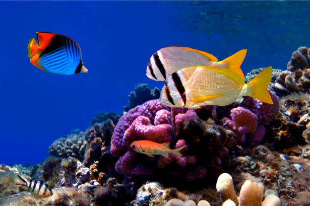 Фотообои ванная море рыба клоун риф (underwater-world-00016)