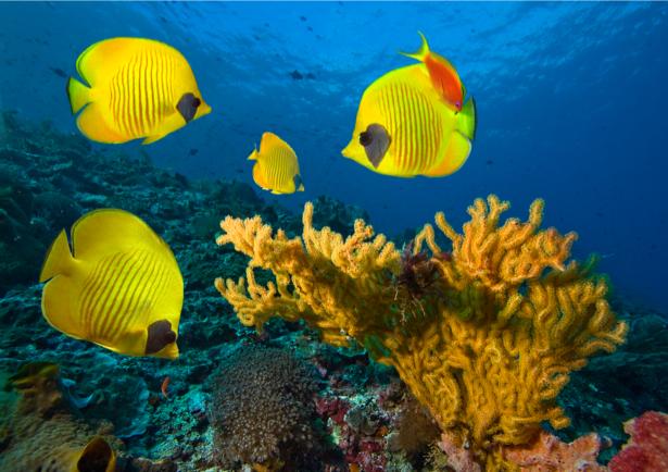 Фотообои подводный мир рыба клоун (underwater-world-00051)