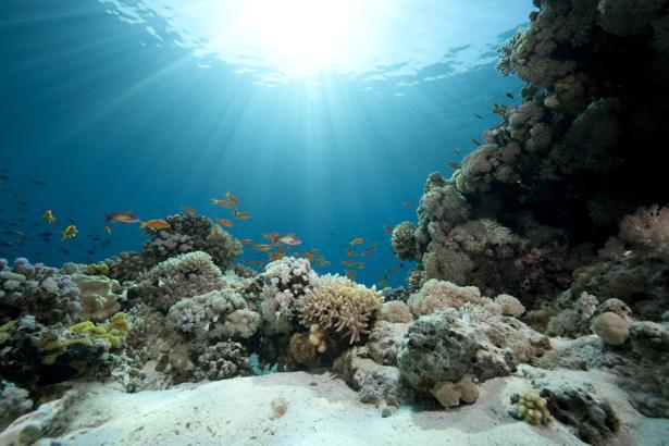 Фотообои подводный мир кораллы 3д (underwater-world-00064)